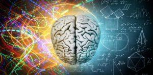 desnoruki-i-levoruki-razlike-u-hemisferama