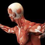 skeletni-mišići