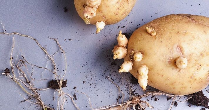 krompir-kao-kontracepcija-1