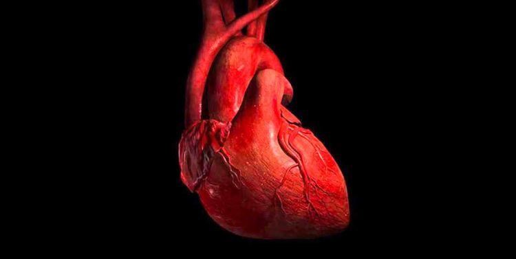tumori-srca-12