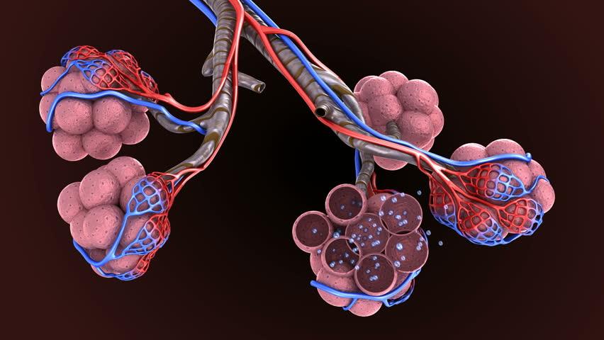 plućna-difuzija-procena-stanja-i-funkcija